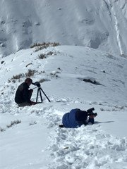 Snow leopard watching tour with expert guides in Ladakh