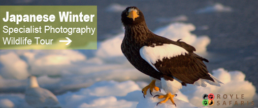 Japanese Winter Wildlife Photography Tour