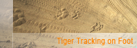 tiger tracking