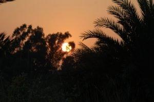 Expert guided wildlife watching holidays of Bangladesh