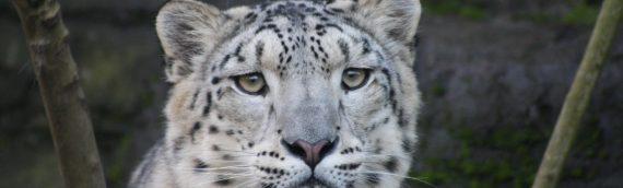 2014 Snow Leopard Tour – Spaces Still Available!