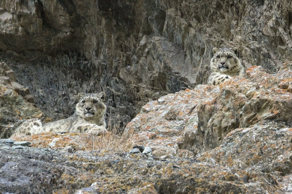 Indian Himalayan wildlife holiday