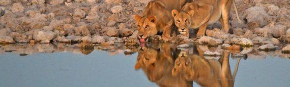 Namibia Safari & Wildlife Photography Tour – June 2021
