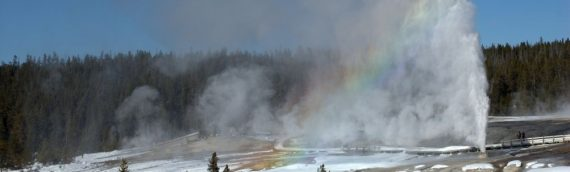 First Yellowstone Wildlife Watching Tour of 2021 Completed